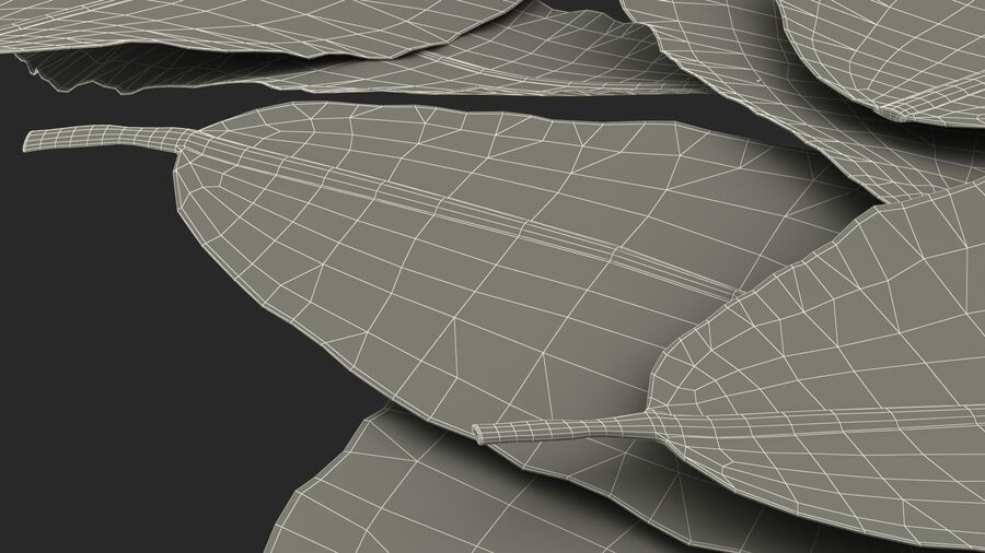 Dry Laurel Leaves royalty-free 3d model - Preview no. 29