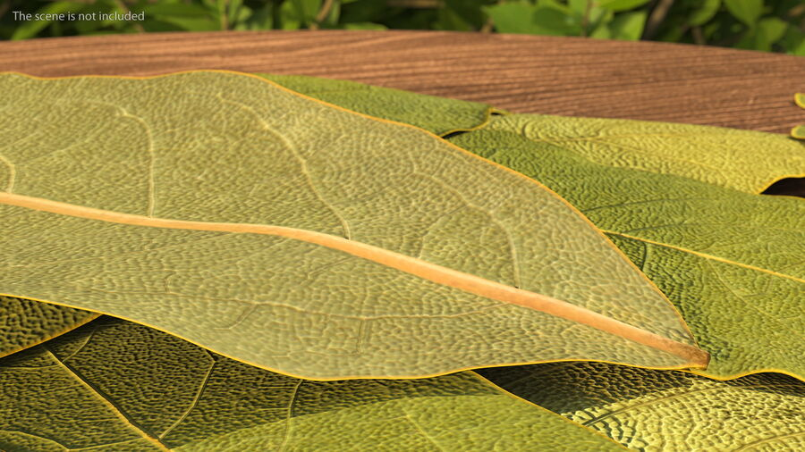 Dry Laurel Leaves royalty-free 3d model - Preview no. 5