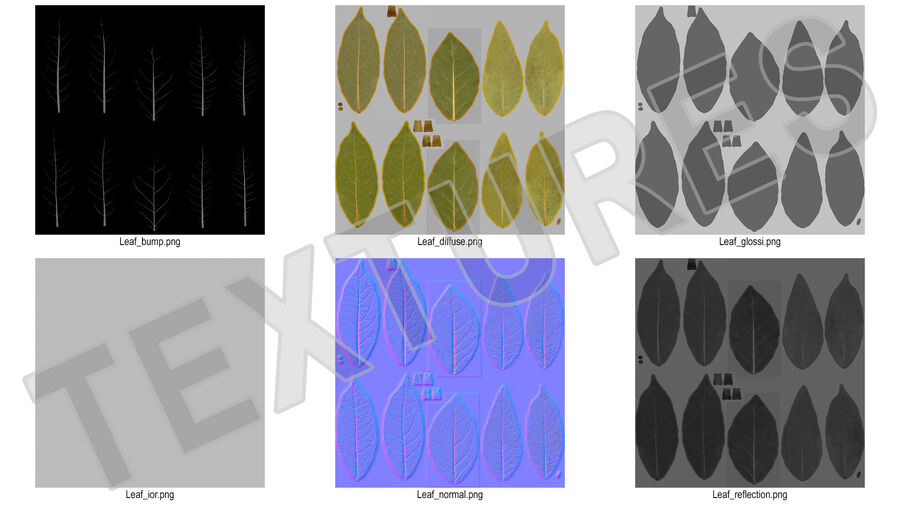 Dry Laurel Leaves royalty-free 3d model - Preview no. 24