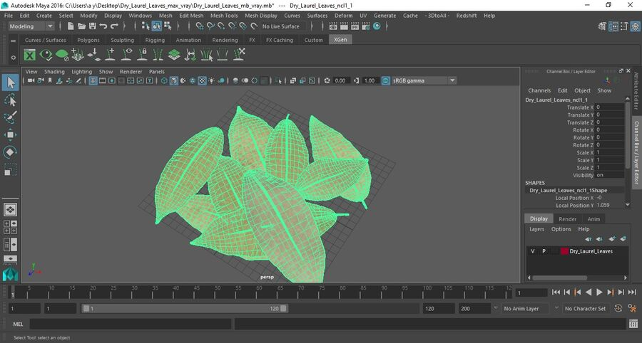 Dry Laurel Leaves royalty-free 3d model - Preview no. 18