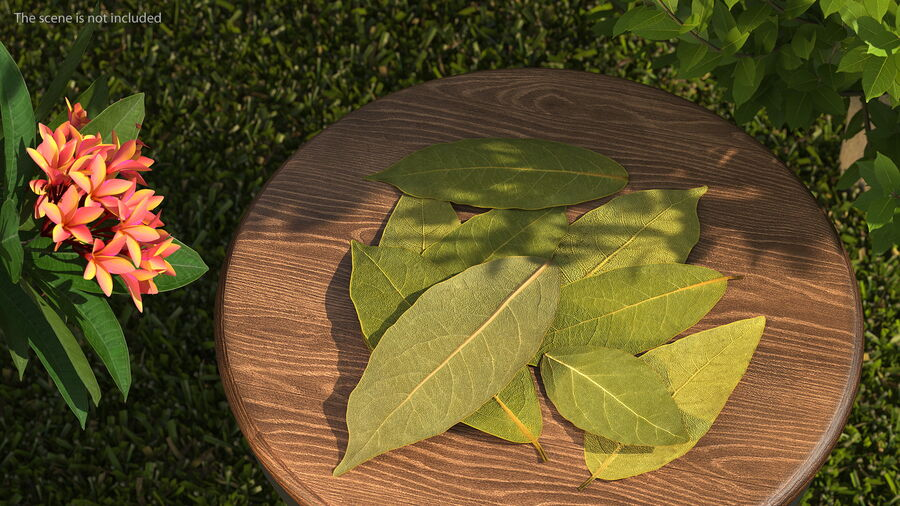 Dry Laurel Leaves royalty-free 3d model - Preview no. 3
