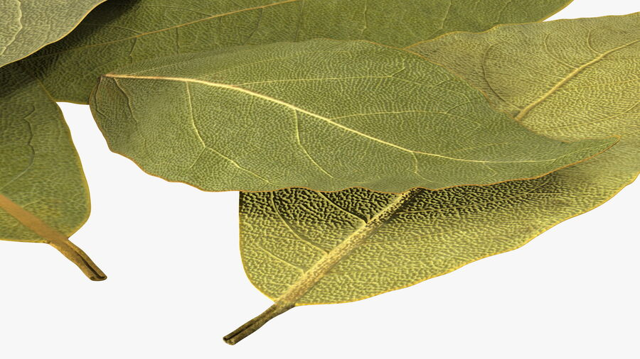 Dry Laurel Leaves royalty-free 3d model - Preview no. 13