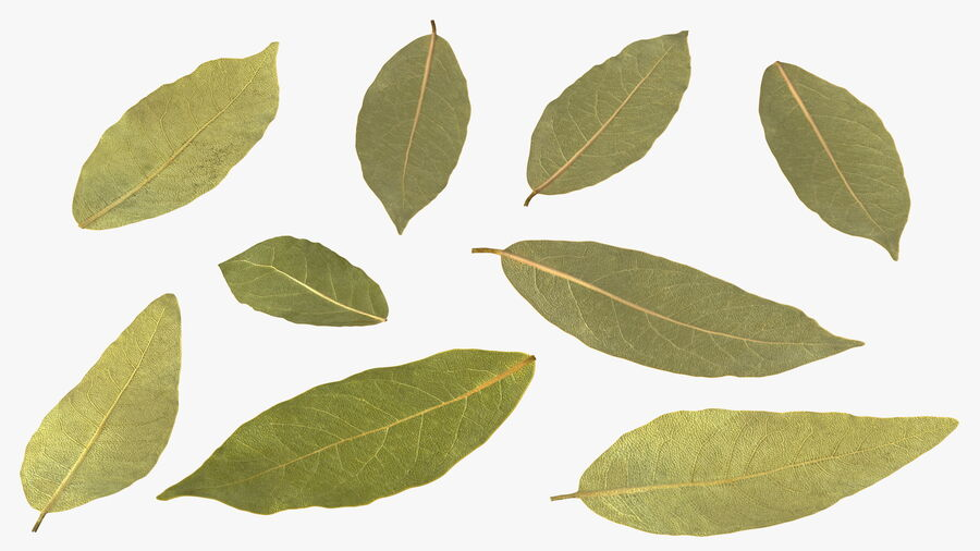 Dry Laurel Leaves royalty-free 3d model - Preview no. 11