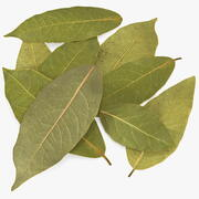 Dry Laurel Leaves 3d model