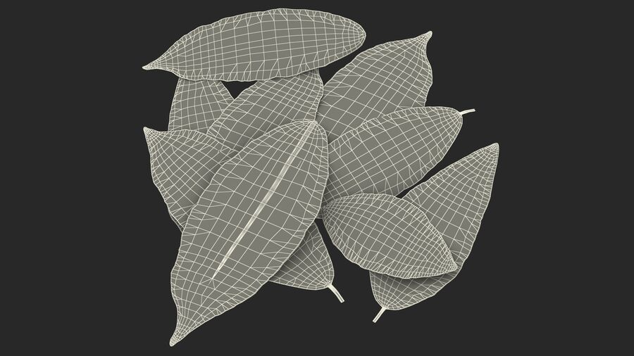 Dry Laurel Leaves royalty-free 3d model - Preview no. 27
