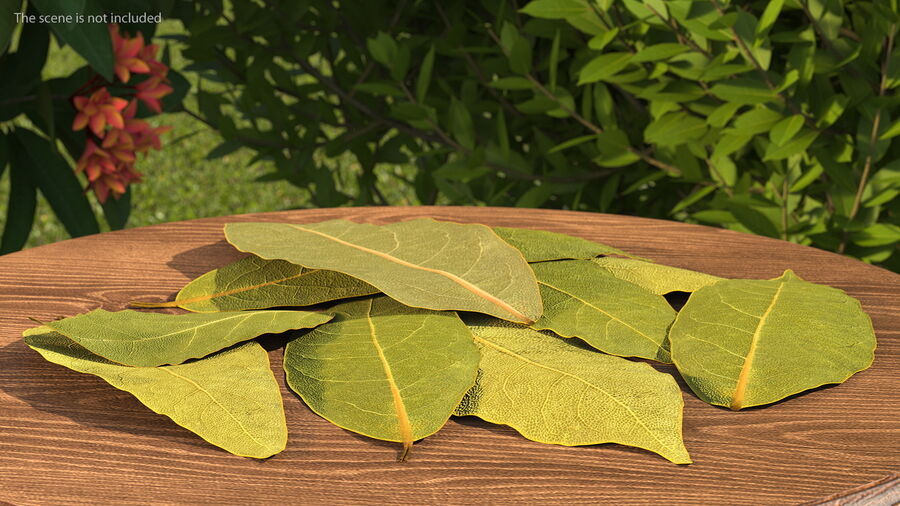 Dry Laurel Leaves royalty-free 3d model - Preview no. 4