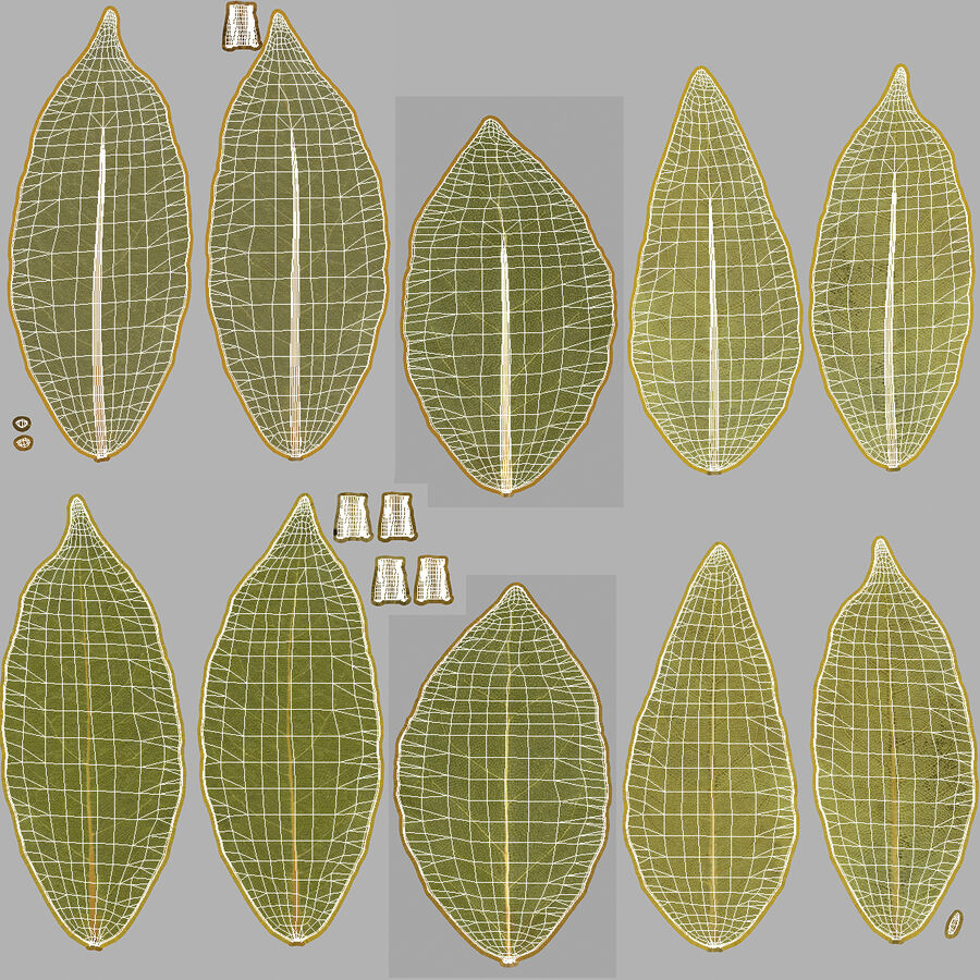 Dry Laurel Leaves royalty-free 3d model - Preview no. 23