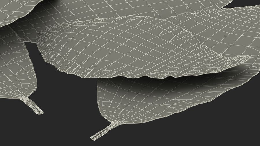 Dry Laurel Leaves royalty-free 3d model - Preview no. 28