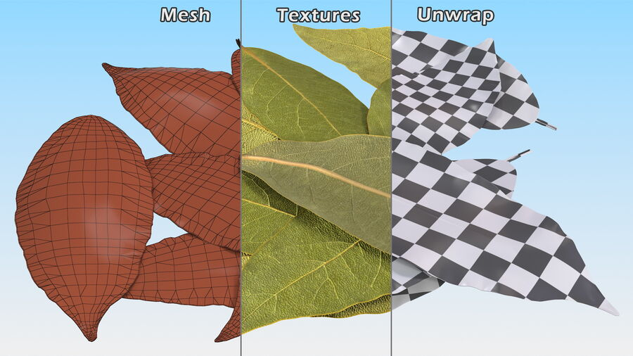 Dry Laurel Leaves royalty-free 3d model - Preview no. 16