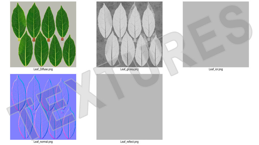 Fresh Laurel Leaf royalty-free 3d model - Preview no. 15