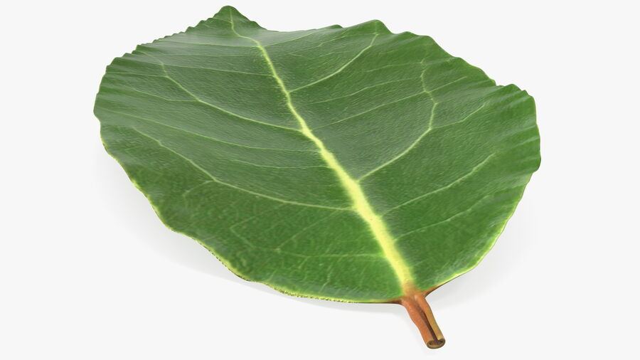 Fresh Laurel Leaf royalty-free 3d model - Preview no. 6