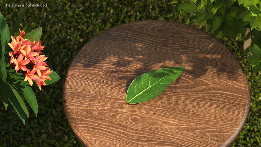 Fresh Laurel Leaf royalty-free 3d model - Preview no. 3