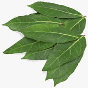 Laurel Leaves 3d model