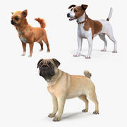 Dogs Collection 2 3d model