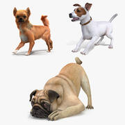 Dogs Rigged Collection 2 3d model