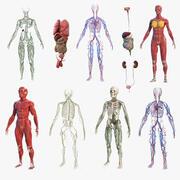 Anatomie-Sammlung für männliche und weibliche Körper 3d model
