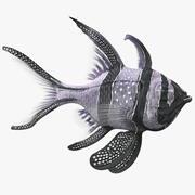 Longfin Cardinalfish zwemmen pose 3d model