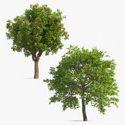 Trees with Nuts Collection 3d model