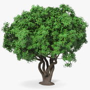 Rhododendron Tree Foliage 3d model