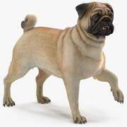 Pug Dog Fur Rigged 3d model