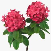 赤いシャクナゲの花 3d model